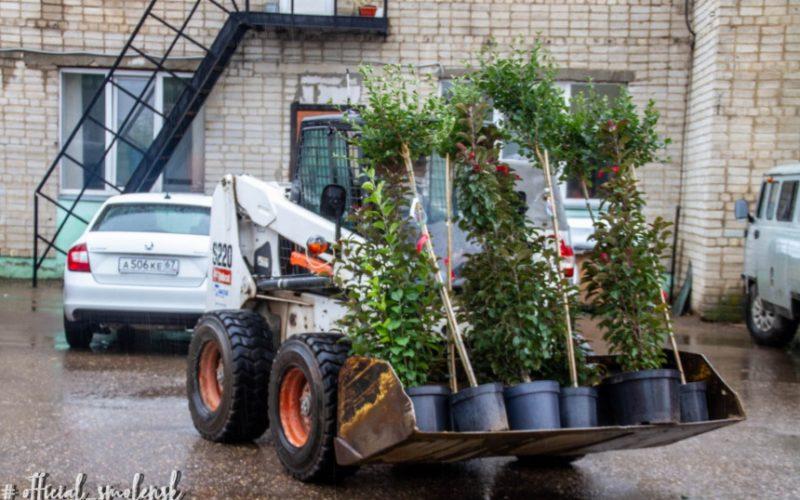 Со дня на день на Николаева в Смоленске высадят сотни молодых деревьев и кустарников
