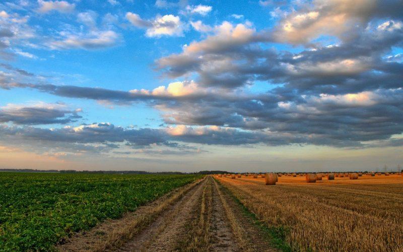 На Смоленщине начали принимать заявки на сельскохозяйственные гранты