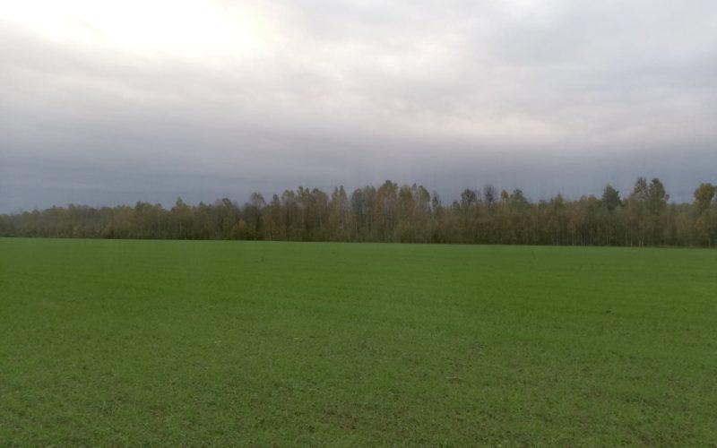В Смоленске завершился пожароопасный сезон с цифрой 25 по количеству лесных пожаров