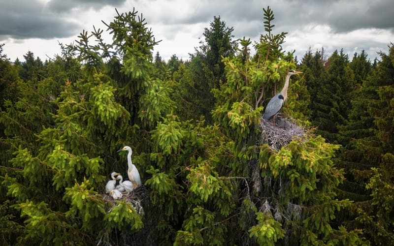Смоленский фотограф стал победителем в международном конкурсе аэрофотографии