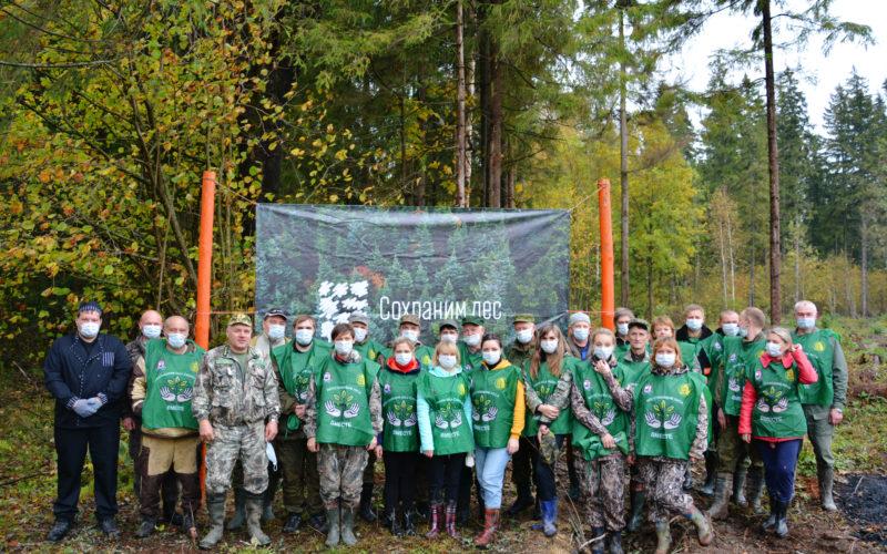 В Смоленской области высадили 4000 саженцев елей