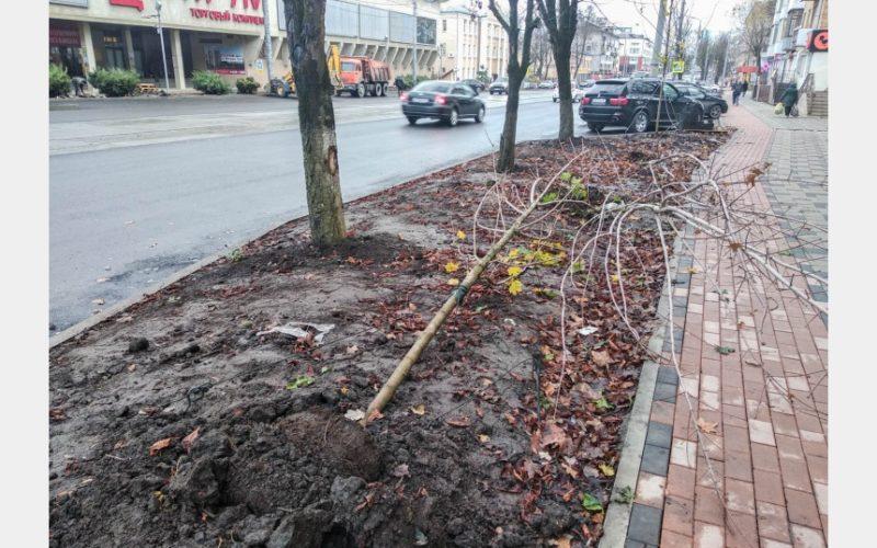 Вандалы в Смоленске вырвали высаженные на Николаева молодые клены