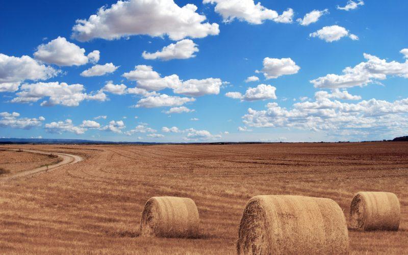 Начальник Департамента по сельскому хозяйству Смоленской области доложил о ходе сбора урожая
