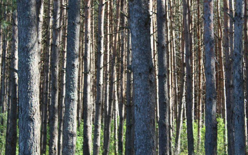 В черте Смоленска появится новая особо охраняемая природная территория