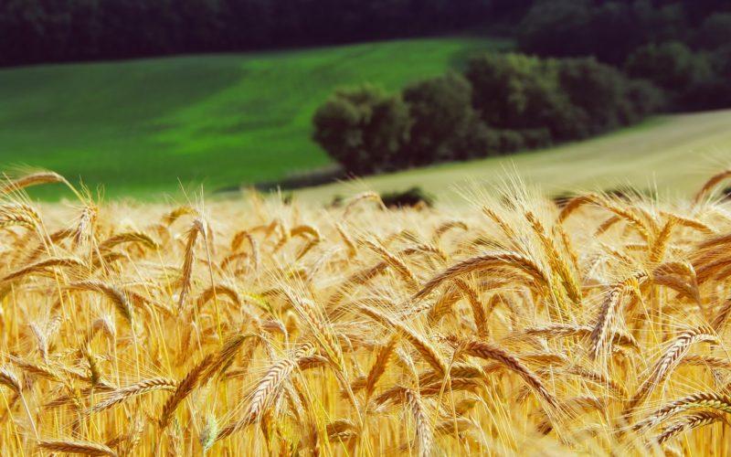 Аграрный год Смоленщина закончила с «плюсом» по всем фронтам