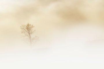 Гололед и туман: в Смоленской области сохраняется «желтый» уровень погодной опасности