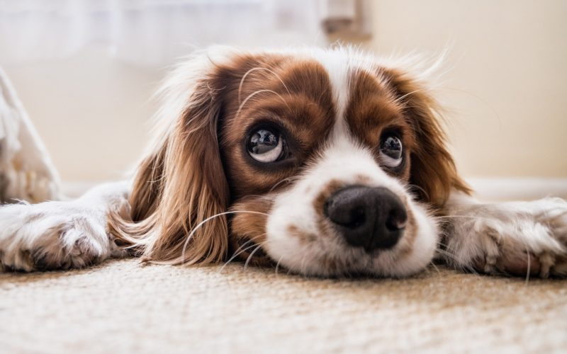 В Смоленске появилась первая «скорая помощь» для домашних животных