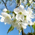 Как будем отдыхать на майские праздники и какие рабочие дни будут сокращенными