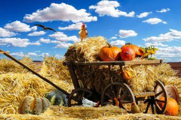 В Смоленской области 11 июня состоится праздник «День Фермера 2021»