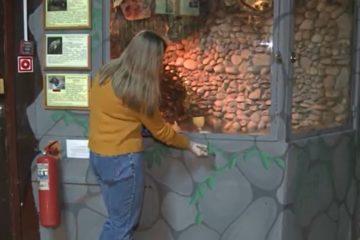 Стены Смоленского зоопарка преображаются, волонтеры и художники трудятся над ними каждый день