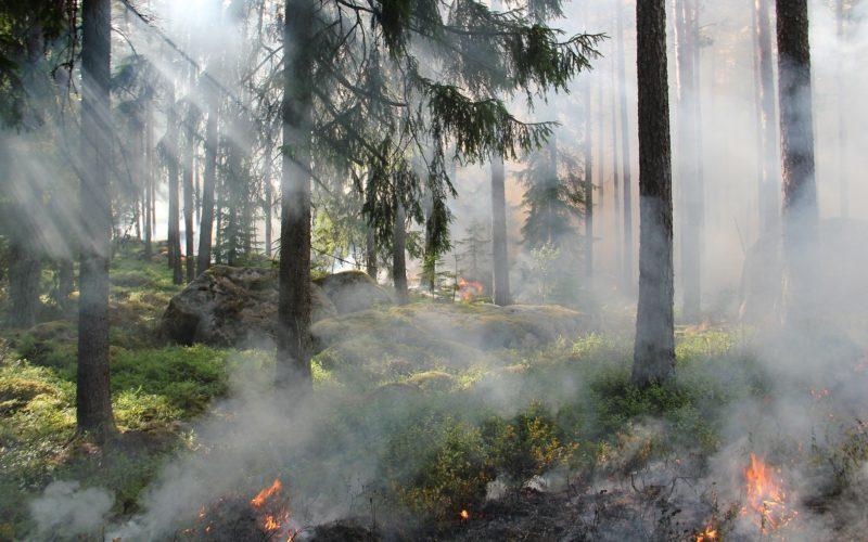 22 июня на Смоленщине ожидается аномальная жара, которая продлится несколько дней