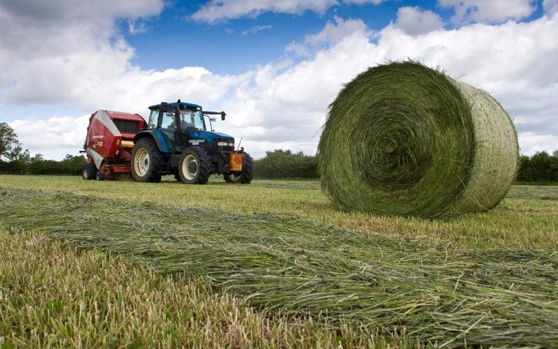 В Смоленской области началась заготовка кормов: собрано уже 9 000 тонн сенажа