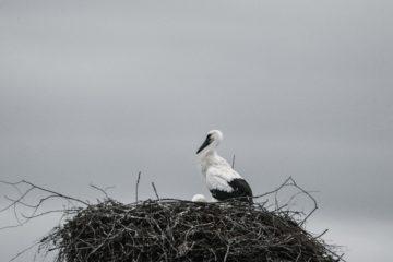 Из-за провалившегося внутрь водонапорной башни гнезда с птенцами жители целой деревни в Смоленской области 2 месяца остаются без воды