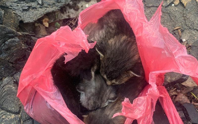 Смолянин, подбросивший маленьких котят в пакете соседке, наказан не будет