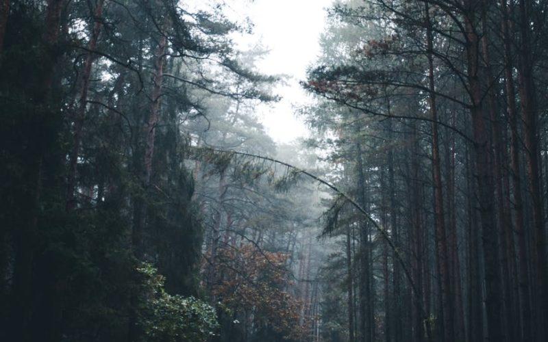 В Рославльском районе женщина родила в лесу. Теперь она под следствием по подозрению в убийстве своего ребенка