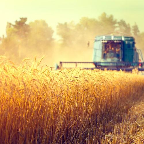 Россельхозбанк на 69% увеличил объем льготного кредитования АПК за 1 полугодие 2021 года