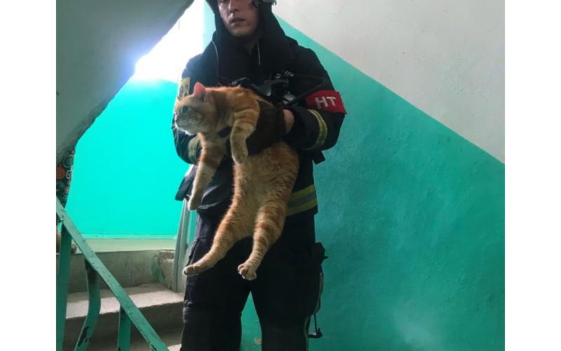 Более 10-ти кошек спасли пожарные сегодня утром в Смоленске