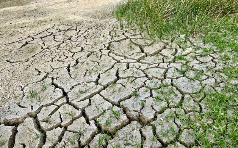 Как долго еще на Смоленщине продлится жара, и что происходит с местной природой