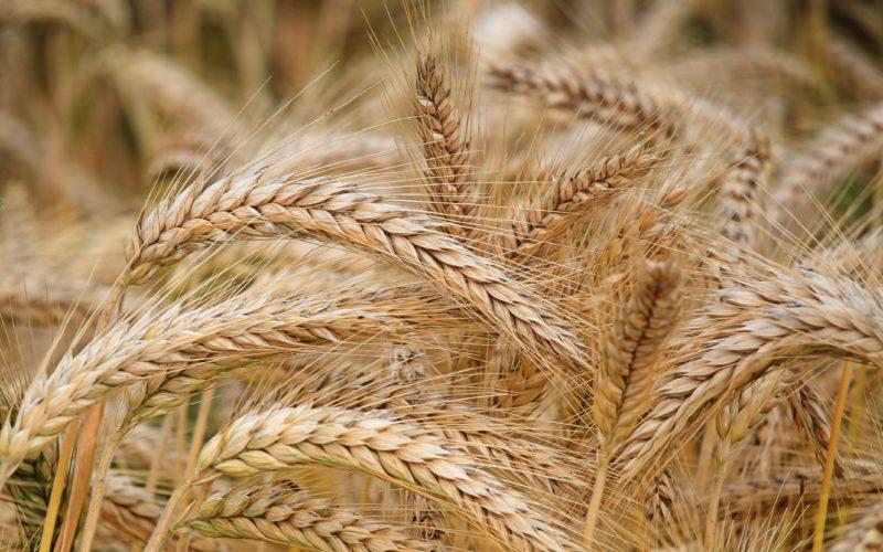 На Смоленщине планируется собрать рекордный урожай